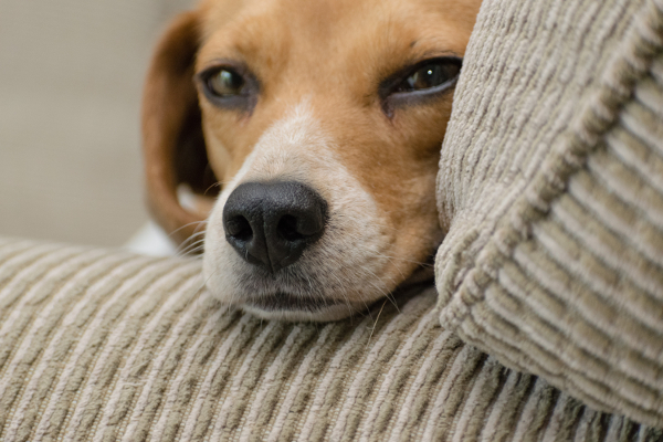 Lemmikloom üürikorteris on lubatud, kui üürileandja on sellega nõus